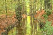Herfst landschap