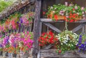 Landschap ( bloemen)